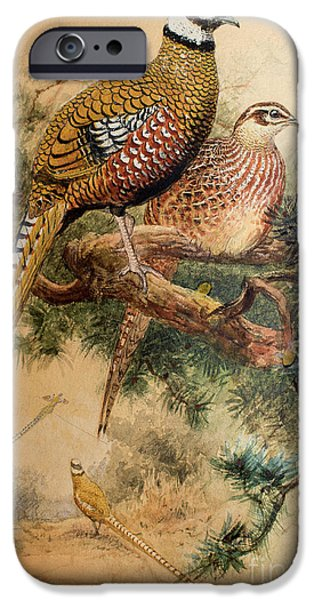 Bar-tailed Pheasant IPhone 6s Case by Joseph Wolf