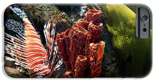 Barnacle Buddies IPhone 6s Case by Bill Pevlor