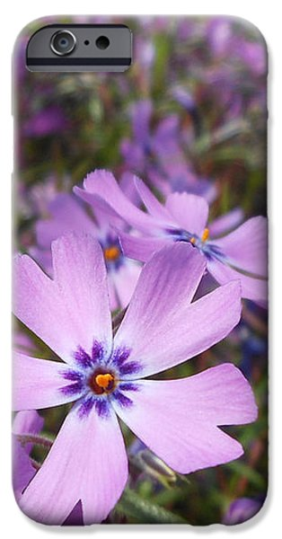Beautiful Creeping Purple Phlox IPhone 6s Case