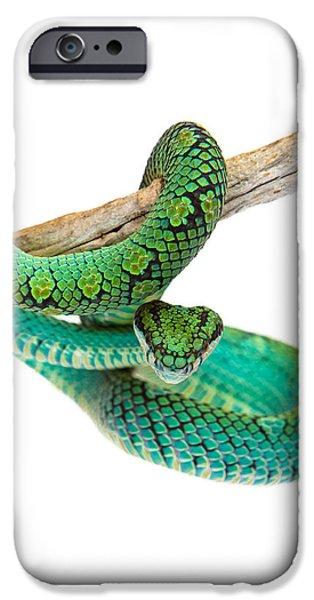 Beautiful Sri Lankan Palm Viper IPhone 6s Case