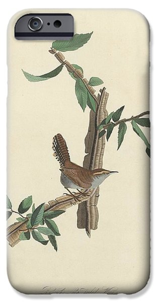 Bewick's Long-tailed Wren IPhone 6s Case by Rob Dreyer
