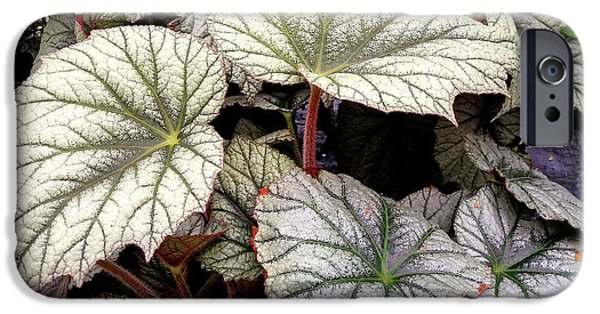 Big Begonia Leaves IPhone 6s Case by Nareeta Martin