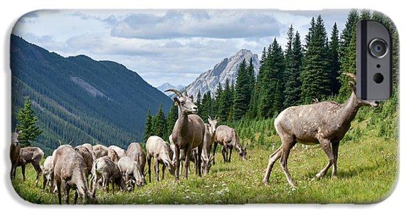 Rocky Mountain Bighorn Sheep iPhone 6s Case - Big Horn Sheep by Paul Quinn