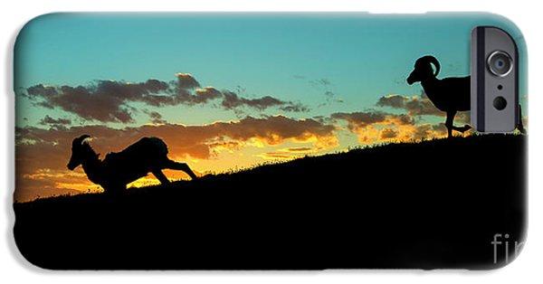Rocky Mountain Bighorn Sheep iPhone 6s Case - Bighorn Sunset by Mike Dawson