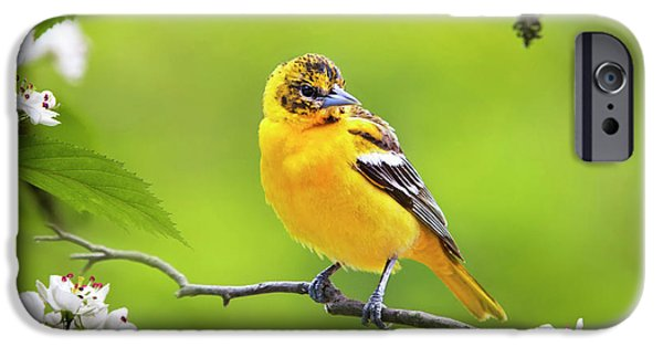 Bird And Blooms - Baltimore Oriole IPhone 6s Case by Christina Rollo