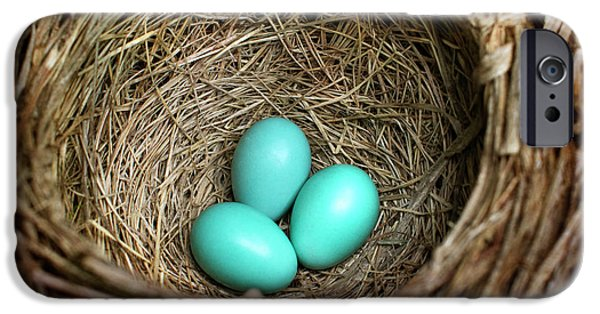 Birds Nest American Robin IPhone 6s Case