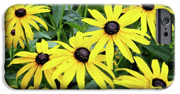 Daisy iPhone 6s Case - Black Eyed Susans- Fine Art Photograph By Linda Woods by Linda Woods
