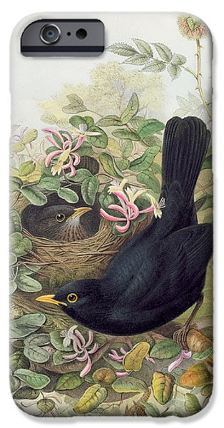 Blackbird,  IPhone 6s Case by John Gould