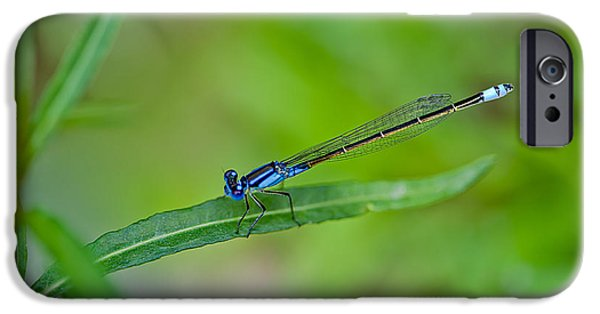 New Leaf iPhone 6s Case - Blue Dragonfly by Az Jackson