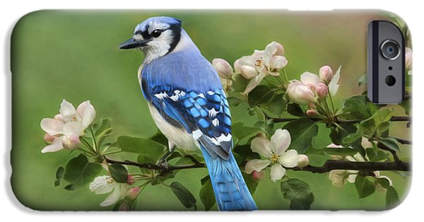 Bluejay iPhone 6s Case - Blue Jay And Blossoms by Lori Deiter