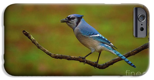 Bluejay iPhone 6s Case - Blue Jay by Lena Auxier