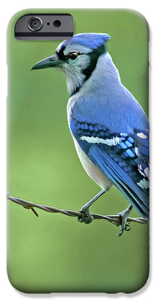 Bluejay iPhone 6s Case - Blue Jay On The Fence by Robert Frederick