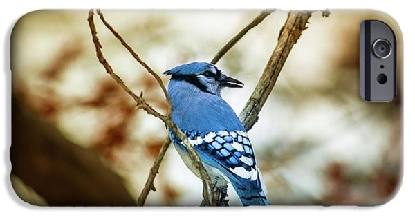 Bluejay iPhone 6s Case - Blue Jay by Robert Frederick