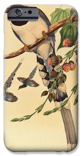 Magpies iPhone 6s Case - Blue Magpie, Urocissa Magnirostris by John Gould