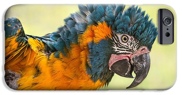 Blue Throated Macaw IPhone 6s Case