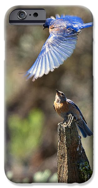 Bluebird Buzz IPhone 6s Case