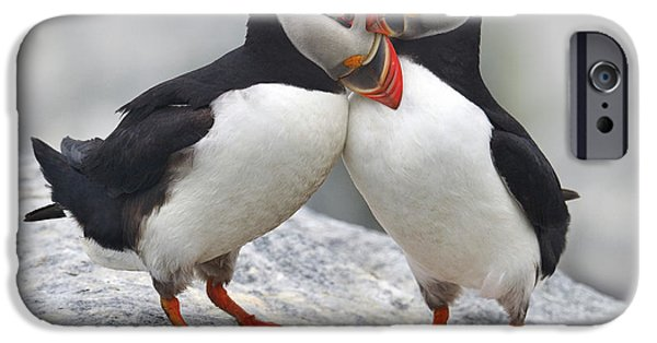 Puffin iPhone 6s Case - Bonded And Banded by Tony Beck