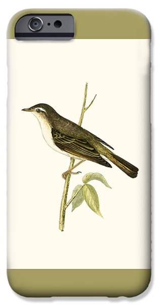 Bonelli's Warbler IPhone 6s Case by English School