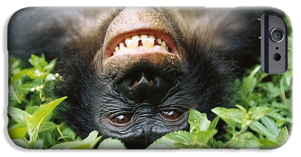 Bonobo Pan Paniscus Smiling IPhone 6s Case