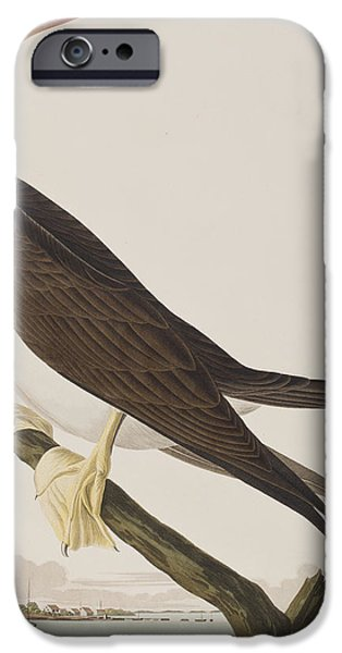 Booby Gannet   IPhone 6s Case by John James Audubon