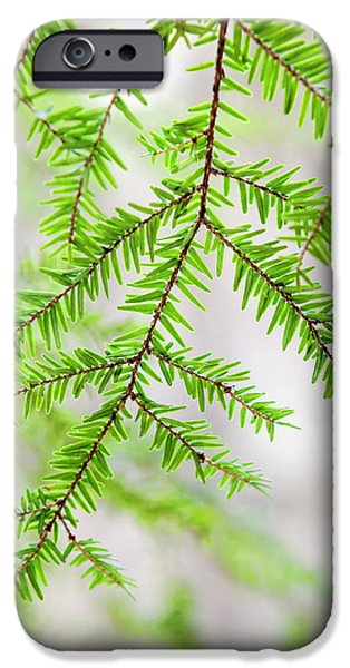 IPhone 6s Case featuring the photograph Botanical Abstract by Christina Rollo