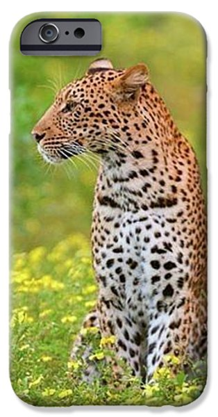 Botswana Leopard  IPhone 6s Case