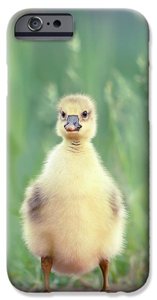 Gosling iPhone 6s Case - Brave New Baby - Gosling Ready To Conquer The World by Roeselien Raimond