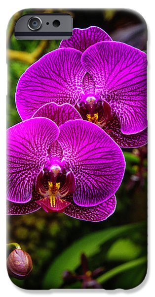 Bright Purple Orchids IPhone 6s Case by Garry Gay