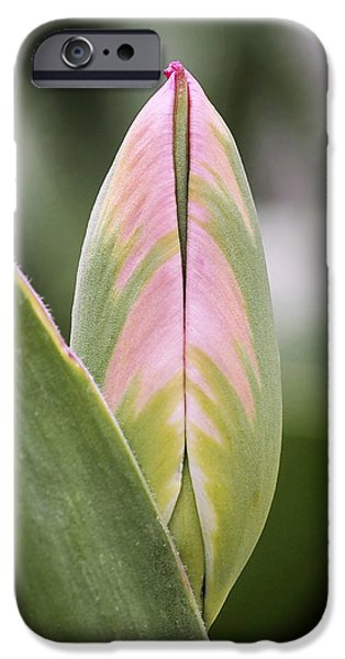 Budding Beauty IPhone 6s Case by Rona Black