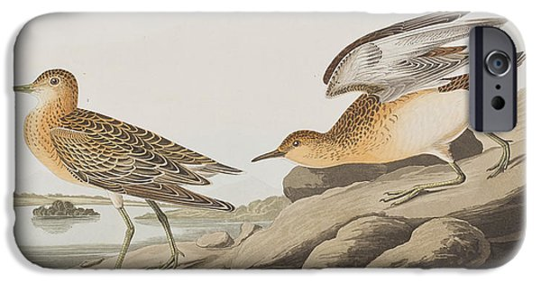 Sandpiper iPhone 6s Case - Buff Breasted Sandpiper by John James Audubon