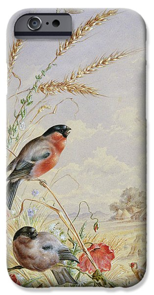Bullfinches In A Harvest Field IPhone 6s Case by Harry Bright