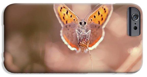 Butterfly Beauty IPhone 6s Case by Roeselien Raimond