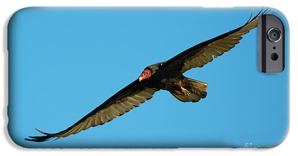 Buzzard Circling IPhone 6s Case by Mike Dawson