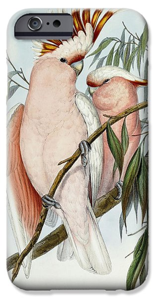 Cacatua Leadbeateri IPhone 6s Case by John Gould