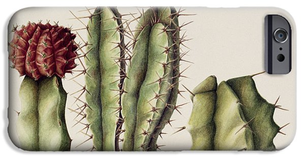 Camel iPhone 6s Case - Cacti by Annabel Barrett