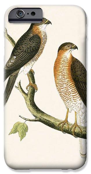 Calcutta Sparrow Hawk IPhone 6s Case by English School