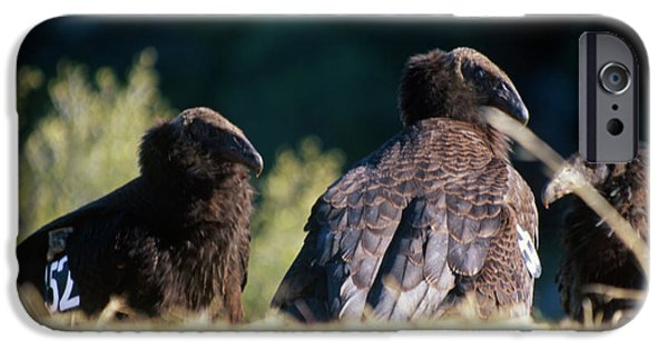 California Condors IPhone 6s Case by Soli Deo Gloria Wilderness And Wildlife Photography