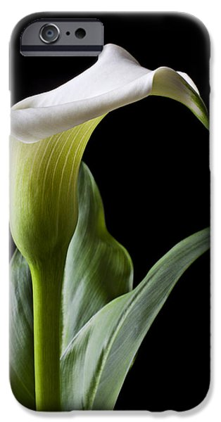 Lily iPhone 6s Case - Calla Lily With Drip by Garry Gay