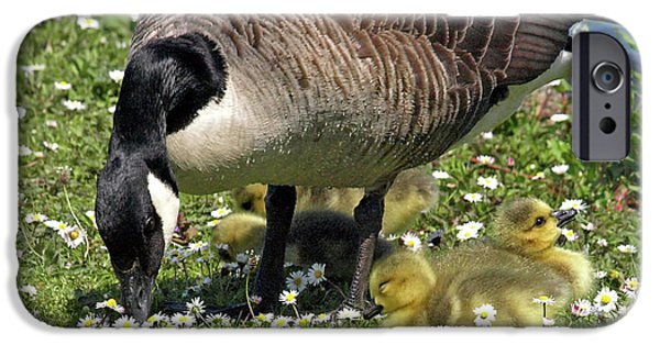 Gosling iPhone 6s Case - Canada Goose And Goslings by Gill Billington