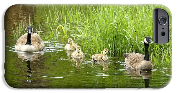 Gosling iPhone 6s Case - Canada Goose Family 2 by Sharon Talson
