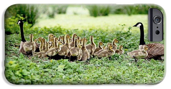 Geese iPhone 6s Case - Canada Gosling Daycare by Rona Black