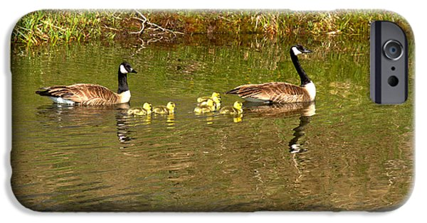 Gosling iPhone 6s Case - Canadian Geese At Schwabacher Landing by Adam Jewell