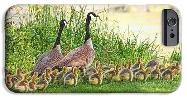 Gosling iPhone 6s Case - Canadian Geese Family by Jennie Marie Schell