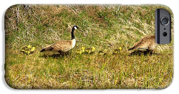 Gosling iPhone 6s Case - Canadian Geese Family Stroll by Adam Jewell