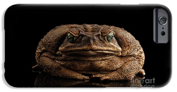 Cane Toad - Bufo Marinus, Giant Neotropical Or Marine Toad Isolated On Black Background, Front View IPhone 6s Case