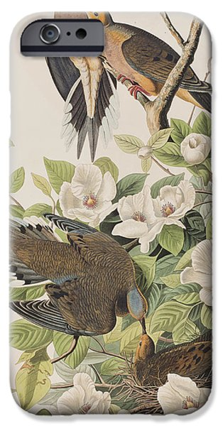 Carolina Turtle Dove IPhone 6s Case by John James Audubon