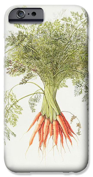 Carrots IPhone 6s Case by Margaret Ann Eden