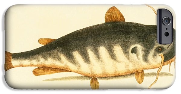 Catfish IPhone 6s Case by Mark Catesby