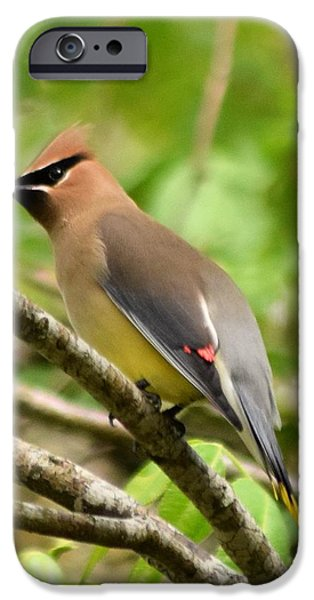 Cedar Wax Wing 1 IPhone 6s Case by Sheri McLeroy