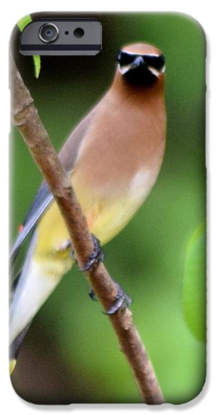 Cedar Wax Wing 2 IPhone 6s Case